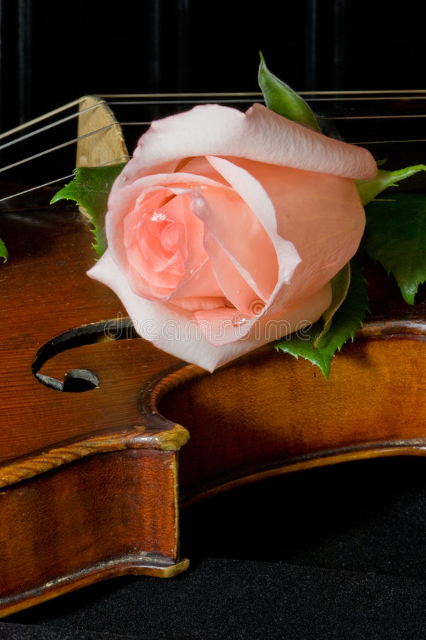 Pale Rose and Old Violin royalty free stock photos
