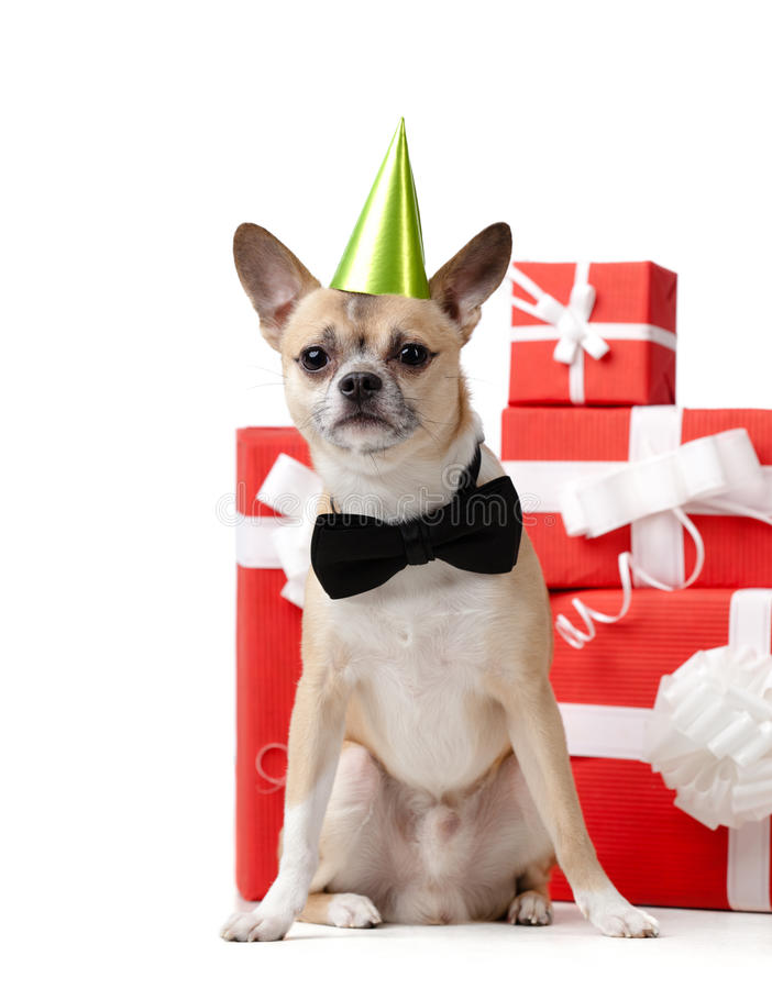 Download Pale Yellow Doggy Near The Presents Stock Image - Image: 29528597