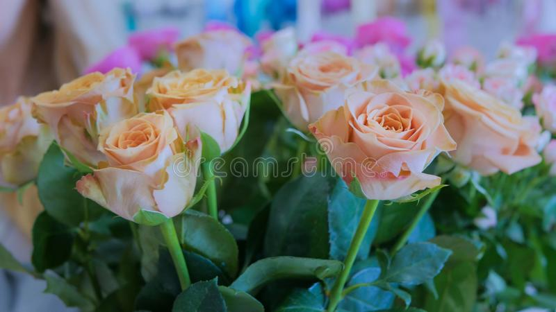 Pale yellow roses stock images