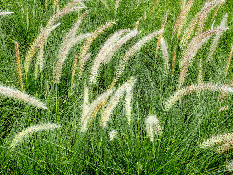 Palea with Green Grasses. Near the street royalty free stock image