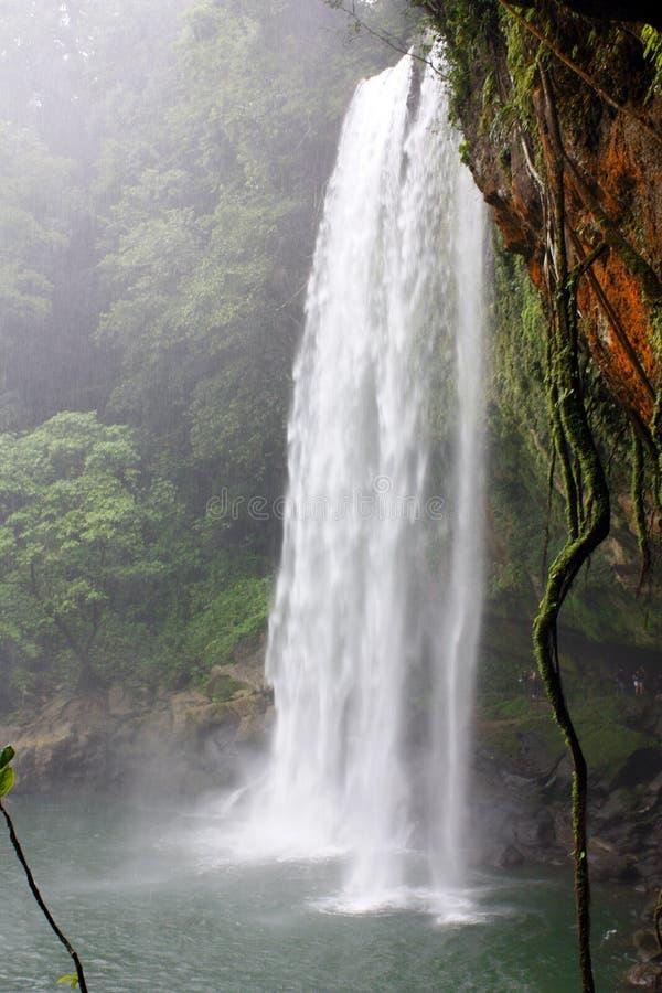 palenque Мексики Водопад стоковое фото rf
