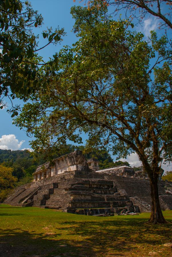 Palenque, Chiapas, Mexico: The ancient Mayan city is in the jungle, trees and ruins. Ancient Mayan city royalty free stock photos