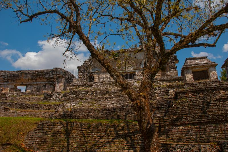 Palenque, Chiapas, Mexico: Ancient Mayan city among trees in Sunny weather. The archaeological area with the ruins royalty free stock photography
