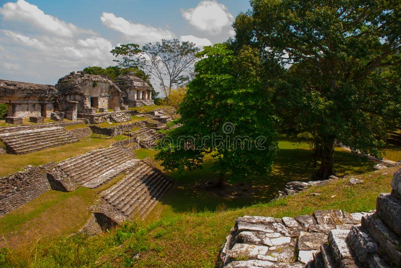 Palenque, Chiapas, Mexico: Ancient Mayan city among trees in Sunny weather. The archaeological area with the ruins stock photo