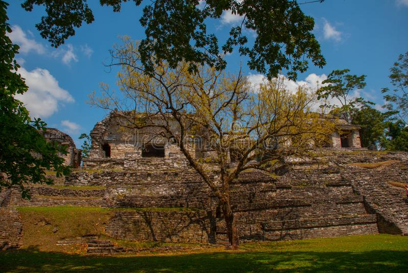Palenque, Chiapas, Mexico: Ancient Mayan city among trees in Sunny weather. The archaeological area with the ruins royalty free stock images
