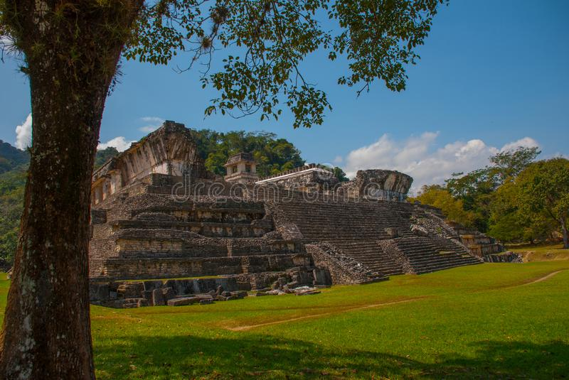 Palenque, Chiapas, Mexico: Mayan ruins taken over by lush jungle. Ancient Mayan city stock photography