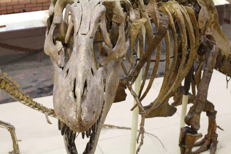 Paleontological museum E fotografering för bildbyråer