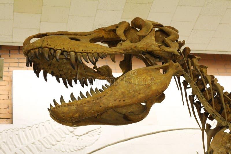 Paleontological museum E arkivbilder