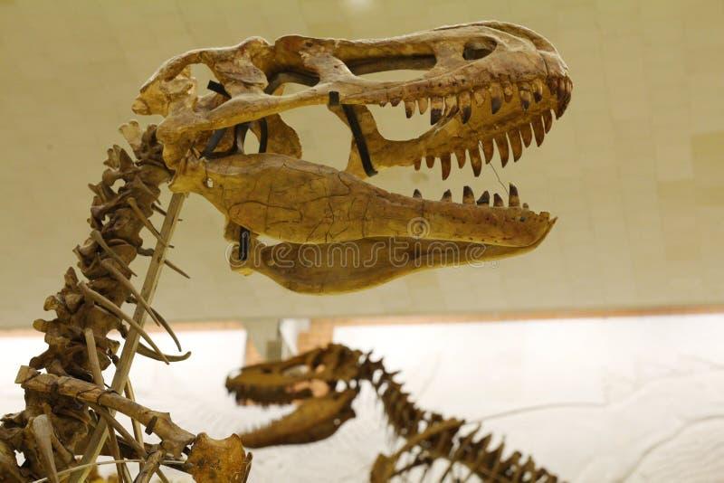 Paleontological museum E royaltyfri fotografi