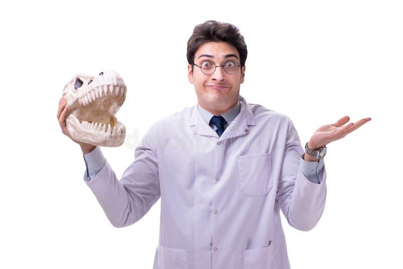 Paleontologyst loco divertido del profesor que estudia los esqueletos animales i foto de archivo libre de regalías