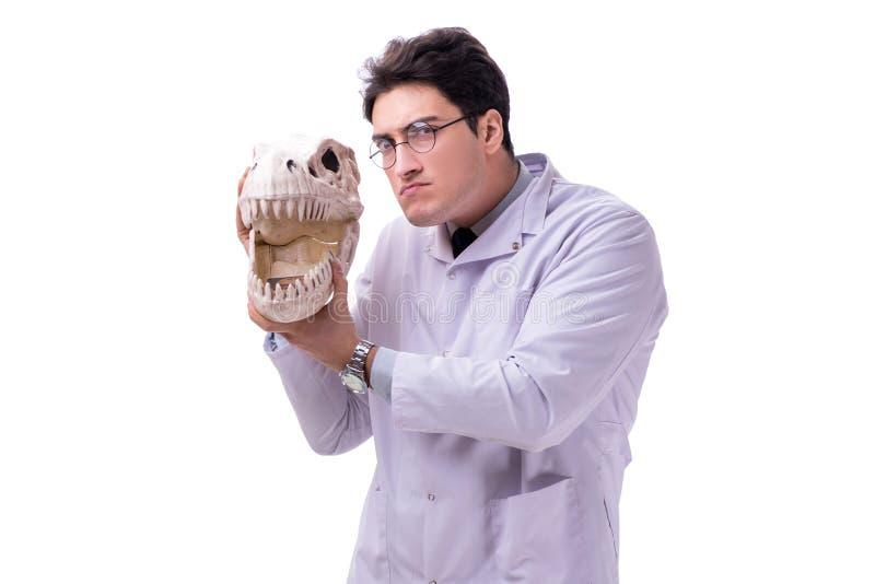 Paleontologyst louco engraçado do professor que estuda os esqueletos animais mim fotos de stock