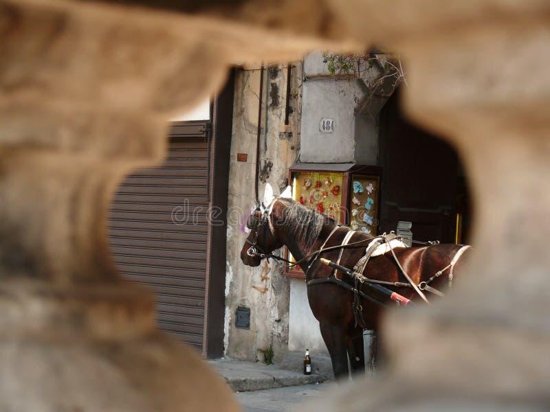 Palermo, Sicilia, Italia Chiuda su di un cavallo visto da un foro immagine stock libera da diritti
