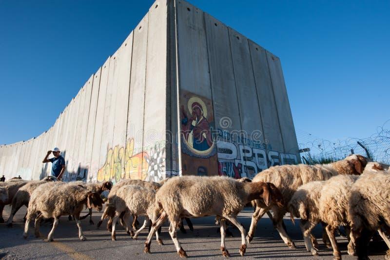 Download Palestinian Sheep At Israeli Separation Wall Editorial Stock Photo - Image: 26380743