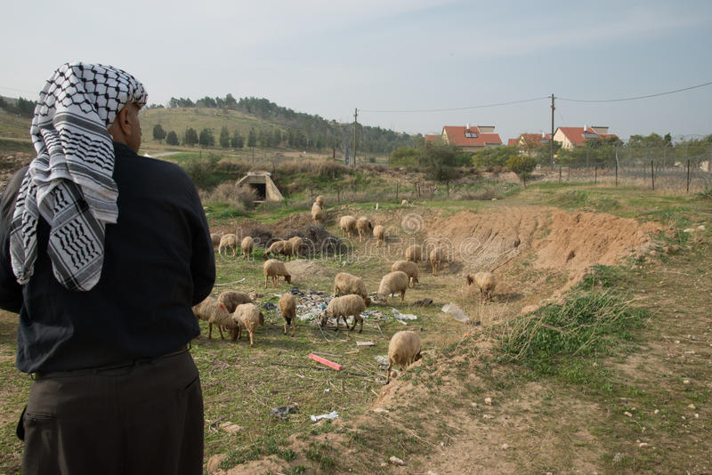 Palestinian shepherd near Israeli settlement stock photo