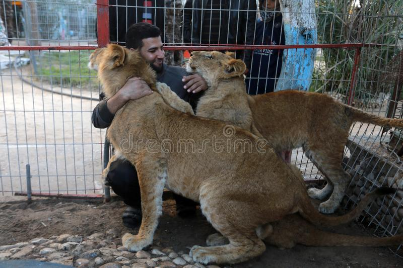 MIDDEL EAST. Palestinian visitors watch Ahmad Jomaa, a zoo worker, play with lions inside their cage at the zoo in Rafah refugee camp, southern Gaza Strip, on stock images