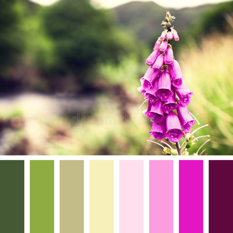 Paleta da digital fotografia de stock