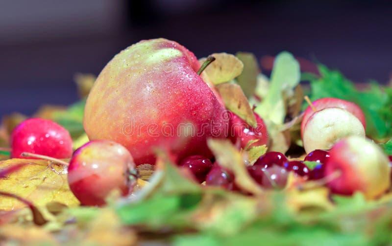 A paleta do outono Ainda vida do fruto e das folhas de outono imagem de stock