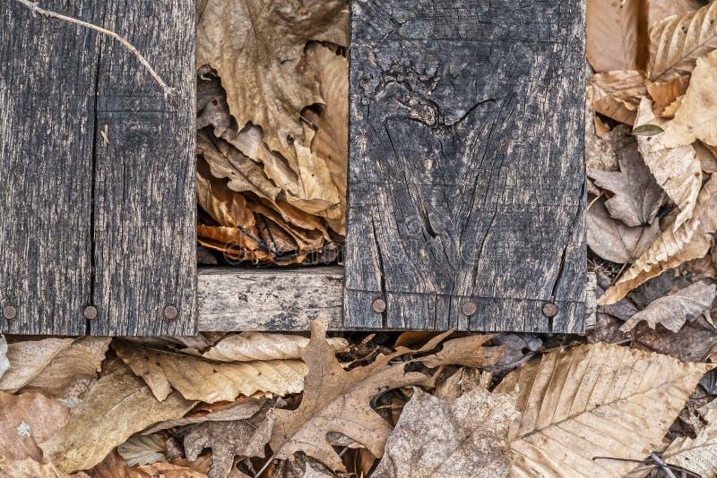 Paleta drewno w lesie obrazy royalty free