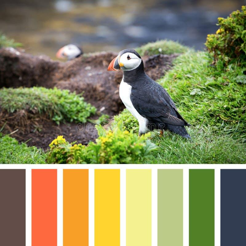 Palette de macareux image stock