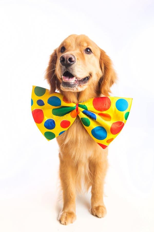 Palhaço do cão fotografia de stock