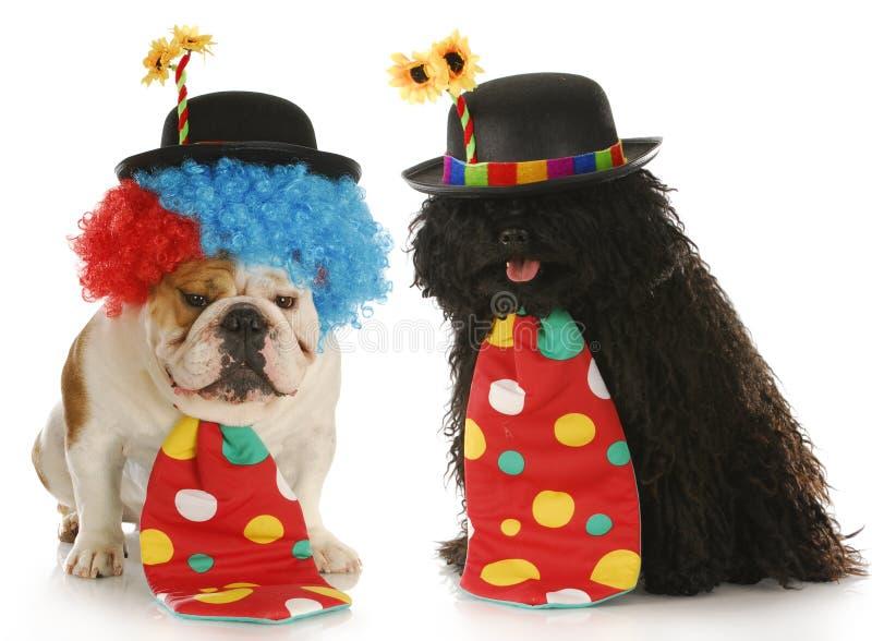 Palhaços do cão foto de stock royalty free