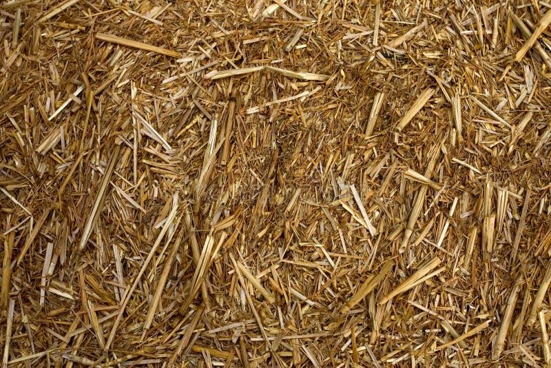 Download Palha foto de stock. Imagem de fodder, naughty, rural, alimento - 526958