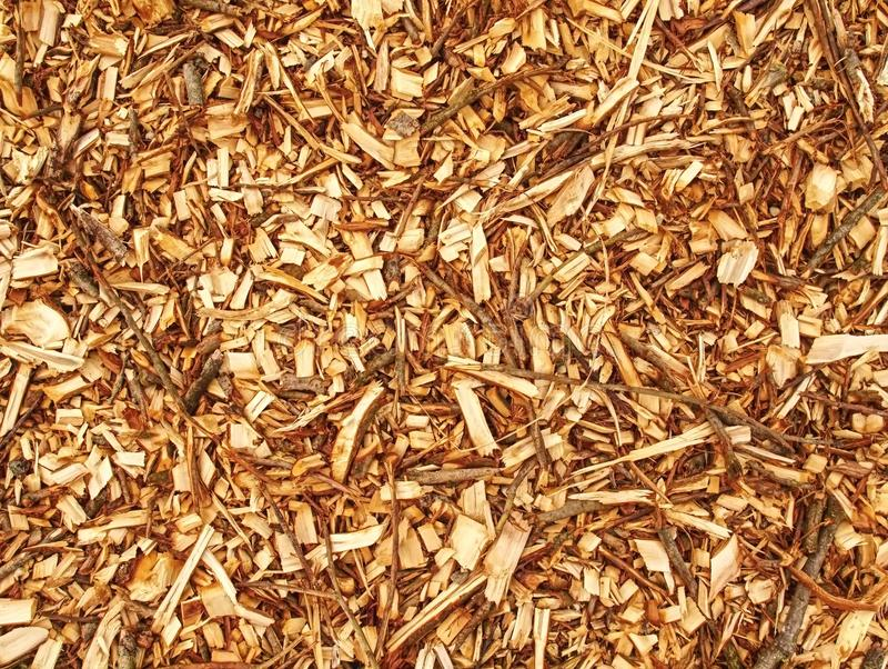 Palha de canteiro de madeira fresca das microplaquetas Lixo da serragem na floresta fotos de stock royalty free