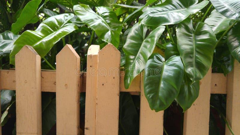 Paliçada e pouca árvore foto de stock