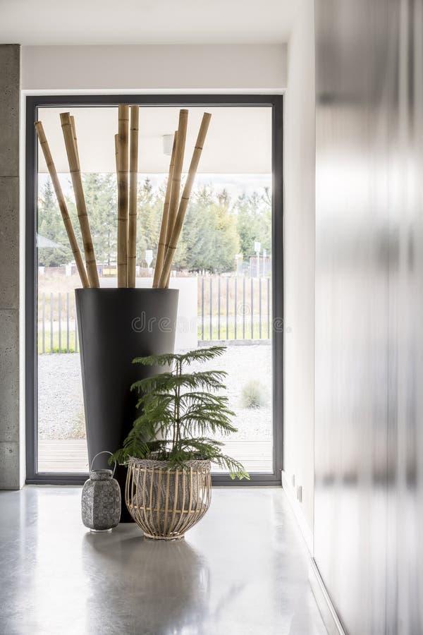 Pali di bambù in grande vaso fotografie stock