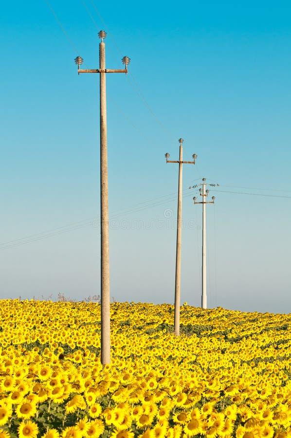 Pali di elettricità nel giacimento del girasole fotografie stock