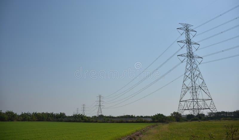Pali elettrici nel giacimento del riso immagini stock libere da diritti