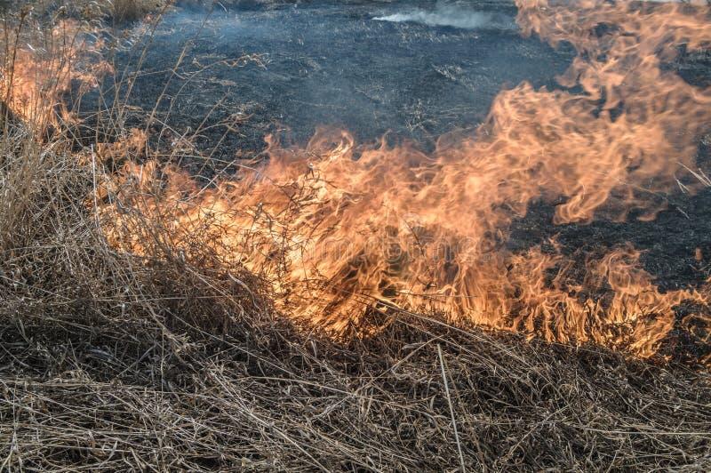 pali suchej trawy zdjęcie royalty free