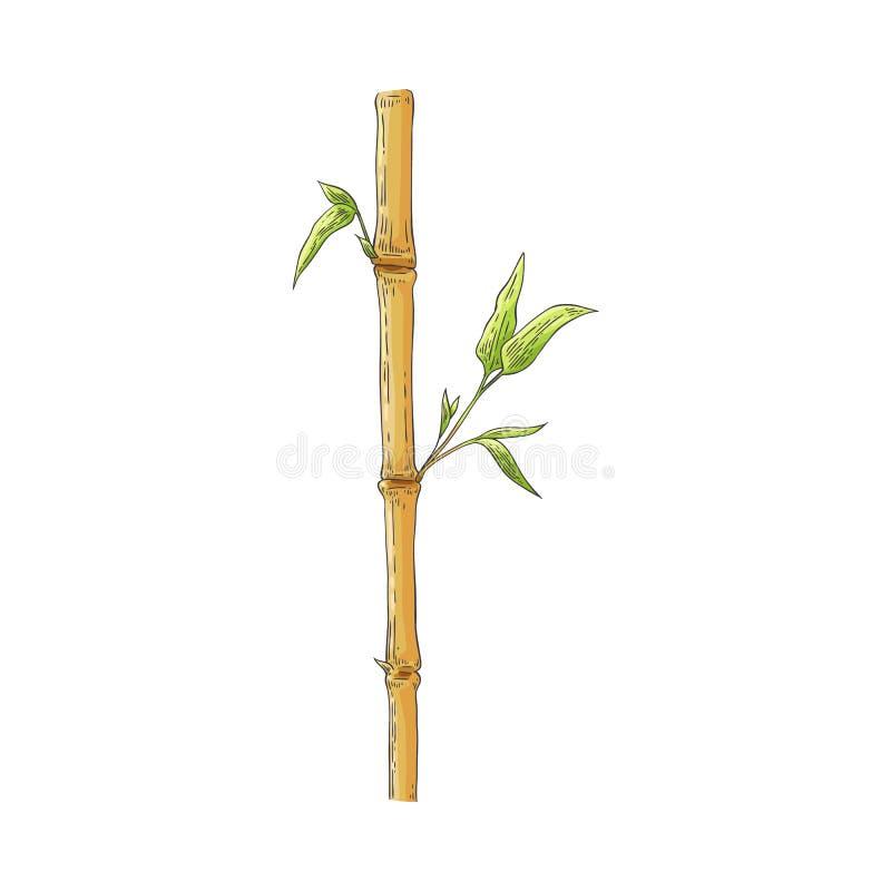 Palillo de bambú de Brown con las hojas verdes en estilo del bosquejo aisladas en el fondo blanco stock de ilustración