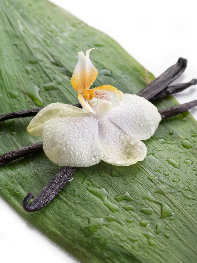 Palillo de la vainilla con la orquídea foto de archivo