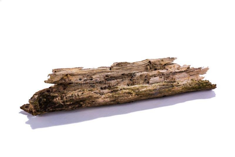 Palillo de madera del decaimiento foto de archivo libre de regalías