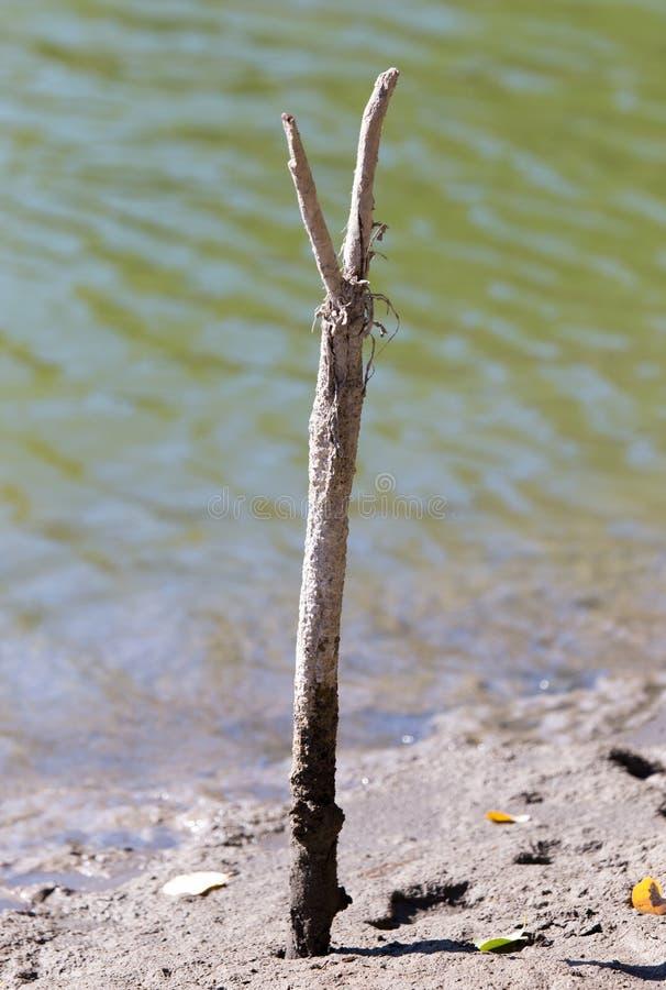 Palillo para una caña de pescar en la orilla fotos de archivo libres de regalías