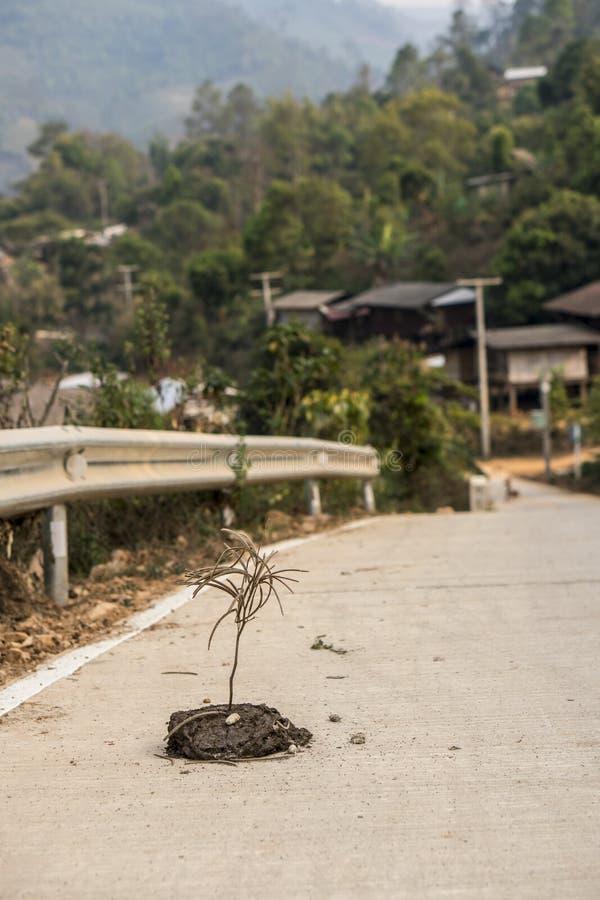 Palillo pegado en mierda de la vaca en la carretera de asfalto cerca del pueblo de montaña en Tailandia imágenes de archivo libres de regalías