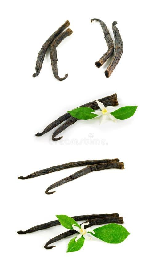 Palillos de la vainilla con la flor imágenes de archivo libres de regalías