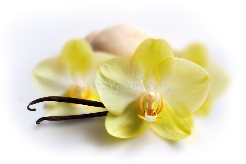 Palillos de la vainilla con la flor y el helado fotografía de archivo libre de regalías