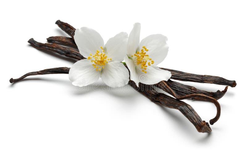 Palillos de la vainilla con las flores del jazmín fotografía de archivo libre de regalías