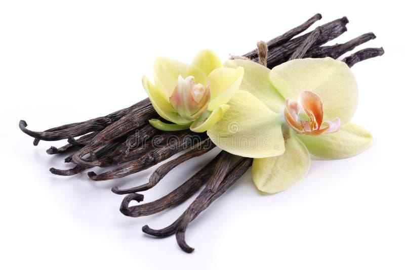 Palillos de la vainilla con una flor. fotografía de archivo libre de regalías
