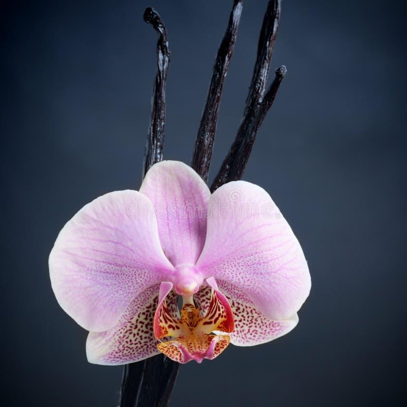 Palillos de la vainilla y flor de la orquídea foto de archivo libre de regalías