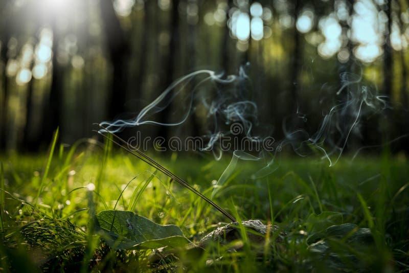 Palillos del incienso del Lit que se colocan en una piedra natural con la amonita de las impresiones de la cáscara, humo en un fo imagenes de archivo