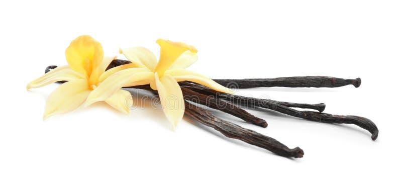 Palillos y flores arom?ticos de la vainilla en blanco imágenes de archivo libres de regalías