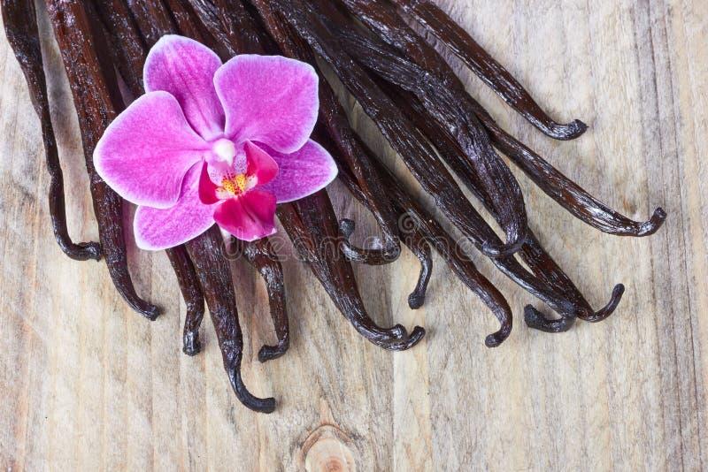 Palillos y orquídea de la vainilla stock de ilustración