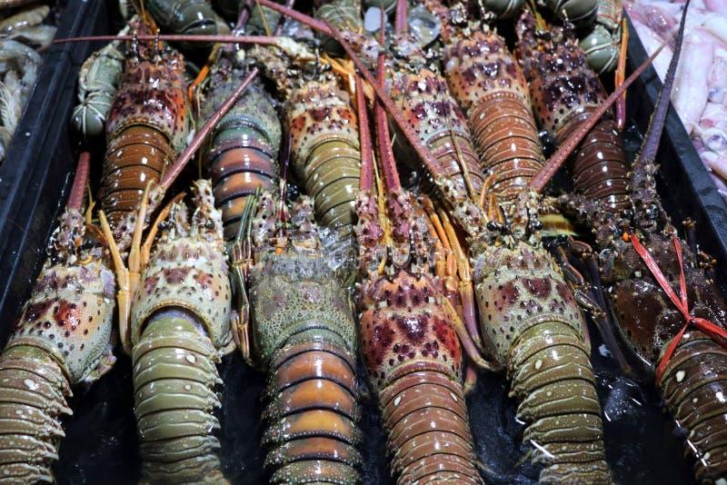 Palinuridae en el mercado de la noche - Kota Kinabalu Borneo Malaysia Asia de las langostas espinosas fotografía de archivo