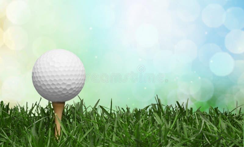 Palla da golf nel fondo dell'erba Sport e fotografia stock libera da diritti