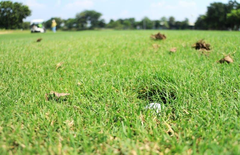 Palla da golf nel foro della testa dell'irrigatore immagini stock