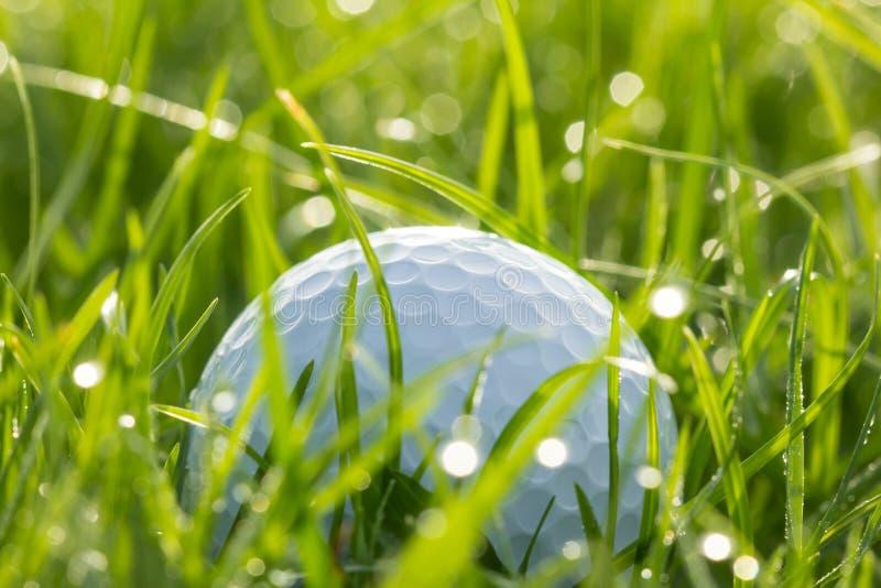 Palla da golf su erba con bokeh immagine stock