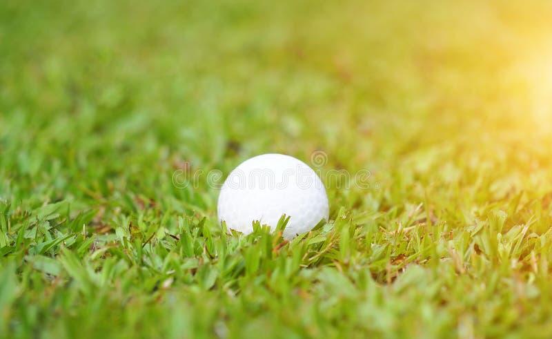 Palla da golf su erba verde nel campo da golf immagine stock libera da diritti